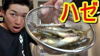 【夏休み】子供でも簡単に釣れる魚で激ウマ料理を作る!