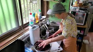 2019.08.22 ばあちゃんの孫への料理教室 ばあちゃん流 しそジュースの作り方。