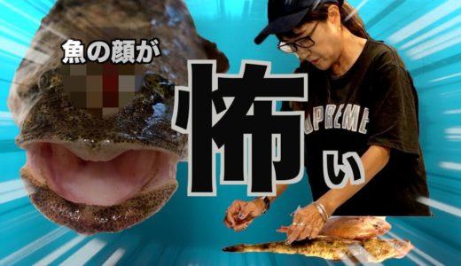 【マゴチ料理】この魚どぅさばくの?食べる所ある?見るからに気持ち悪い!