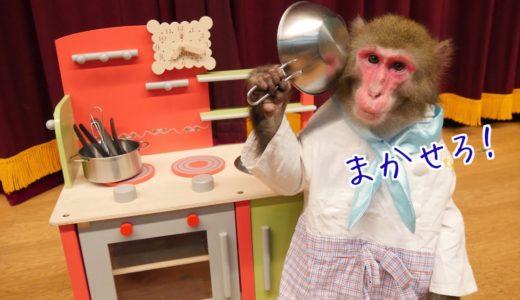 お猿さんに「おままごと」教えたら料理のクセが強すぎたwwww