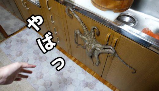 元気過ぎて台所をかけまわるマダコをしめて。ぶったぎりにしてワサビで漬け込む料理。