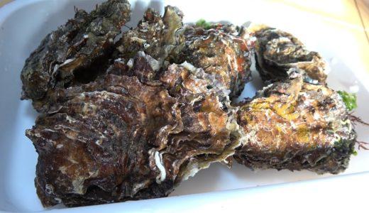 日間賀島の牡蠣で広島の郷土料理『牡蠣の土手鍋』を作るよ!!